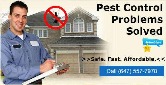 pest control in toronto on