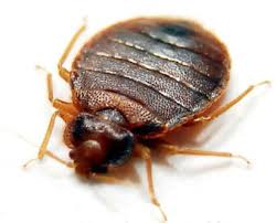 Bed Bug Pest Control, Toronto ON