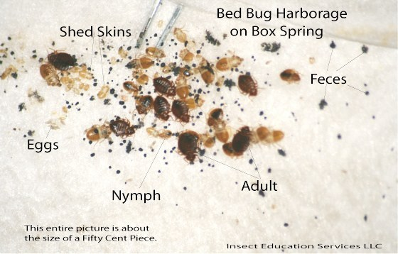 Bed Bug Extermination Is Our Number One Priority in Toronto ON