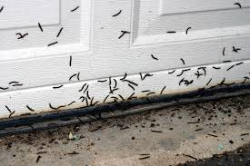 Millipede Pest Control in Toronto ON